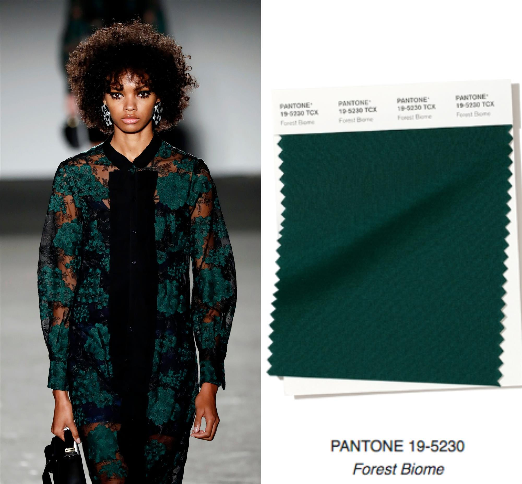 PANTONE 19-5230 - Forest Biome